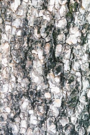 textura de madeira velha para o fundo da natureza