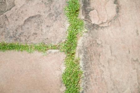 bedrock: Bedrock and real grass