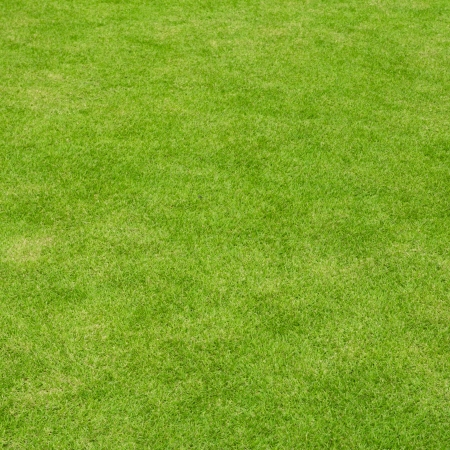 Background beautiful lawn ( Real grass ) in a square frame