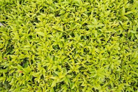 fundo verde folha, natureza fundo