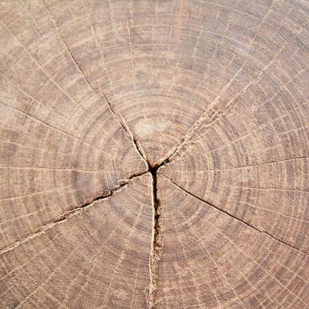 duramen: duramen textura de fondo, la naturaleza de fondo