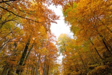 Paisagem com a floresta do outono. Seque as folhas no primeiro plano.