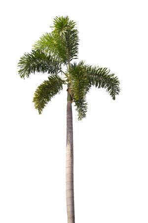 tree on white , isolate object