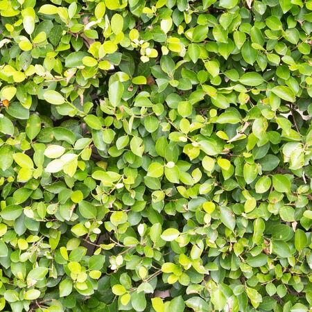 green leaf background, nature background