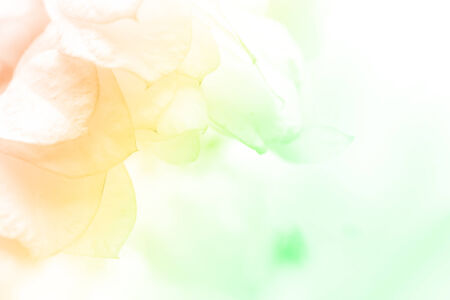 watercolor background: beautiful flowers made with color filters abstract