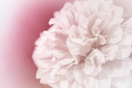 lindas flores feitas com filtros de cor abstrata
