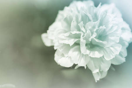 colorize: beautiful flowers made with color filters abstract