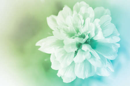 beautiful flowers made with color filters abstract photo