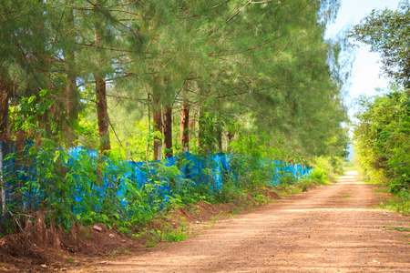 country dirt road through the forest. Nature background photo