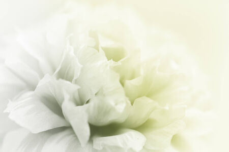 delicacy: flowers background colourful made with color filters abstract