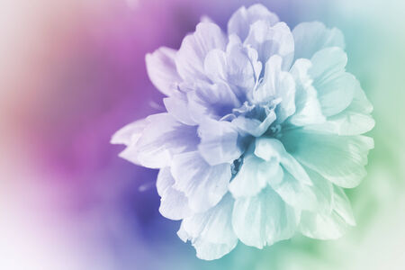 delicacy: beautiful flowers made with color filters abstract