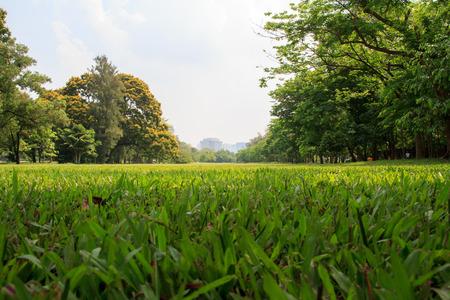 건물 배경으로 푸른 하늘 아래 도시 공원 스톡 콘텐츠 - 40843908