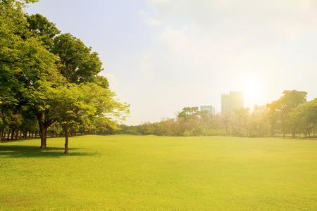 건물 배경과 푸른 하늘 아래 도시 공원 스톡 콘텐츠 - 40844452