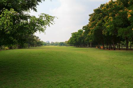 Green grass field in big city park