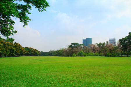 city park skyline: Green grass field in big city park