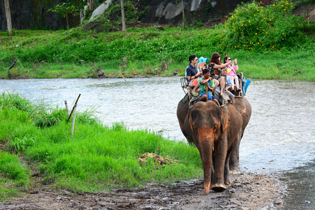 escorting: CHIANG MAI,THAILAND - November 13, 2015:Elephants and mahouts, while escorting tourists to ride elephants along the river in  Mae Wang, Chiang Mai.