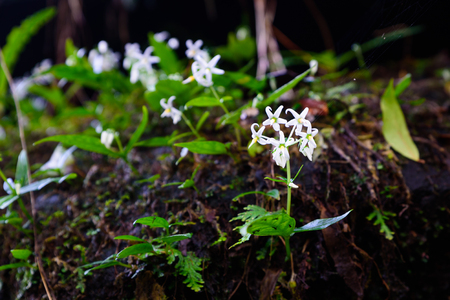 wild white flowering plants in a crack of mountain with moss on the rocks