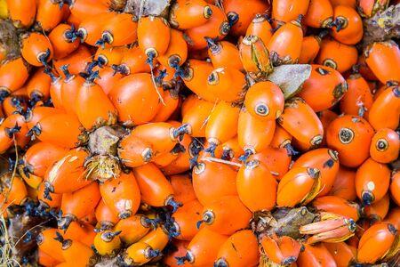 orange palm oil fruit for background texture Stock Photo