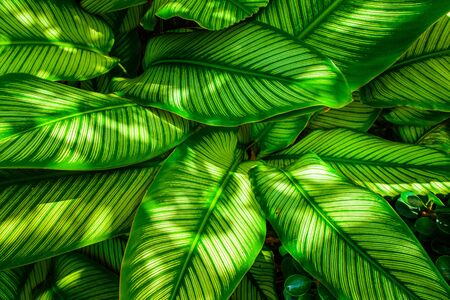 assort: Green leaf texture, pattern leaves on dark and light tone for background