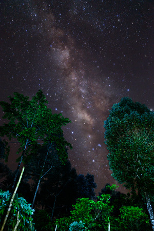 some: Milky Way and some trees. In the mountains of Bolaven Plateau, Laos.