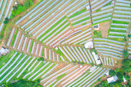aerial photography beautiful view of vegetable plots with clear plastic in the mountain for agriculture concept. Reklamní fotografie