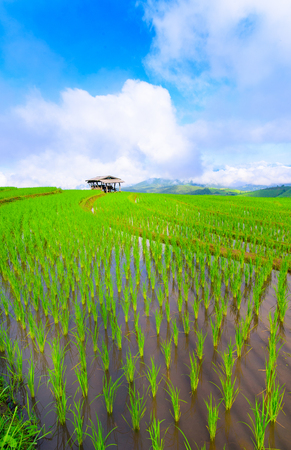view of green rice fields terrace mountain with cottage in countryside Land with grown plants of paddy and sea of fog at Pa Pong Piang, Thailand. Stock Photo