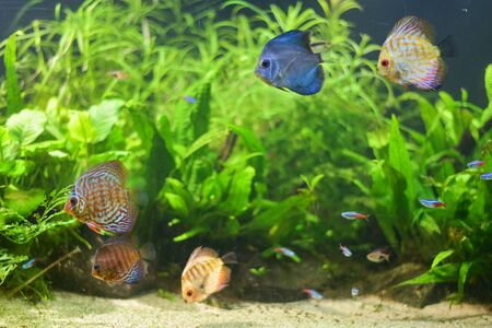 Group of fish swimming in Aquarium, Fish Tank, with Coral Reef, Animals, Nature. 스톡 콘텐츠