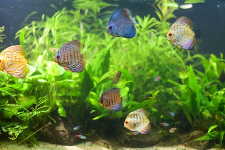 Group of fish swimming in Aquarium, Fish Tank, with Coral Reef, Animals, Nature. 스톡 콘텐츠 - 132134651