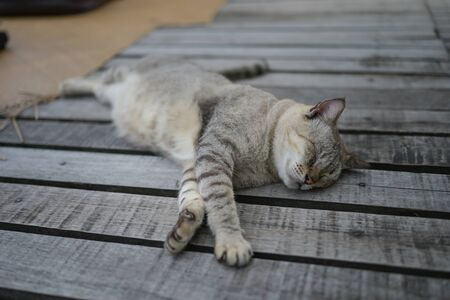 kitten or young gray cat sleeping on wooden way look lazy and cute.
