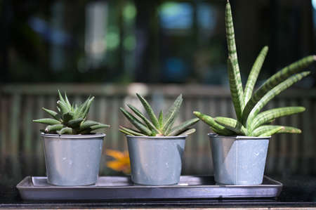 Set of potted house plant cactus succulent in gray pots on  the windowsill. Cozy home modern decor in minimalistic scandinavian interior.