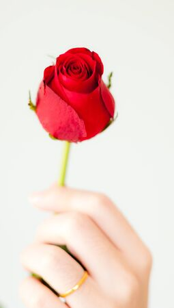 mother's hand: beautiful red rose in womans hand