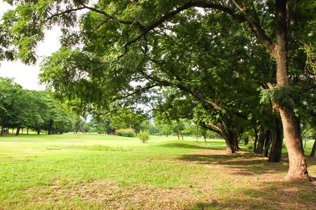 beautiful summer in park