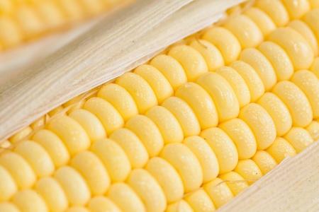 close up of fresh corn Stock Photo