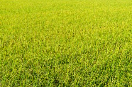 farm field: Farm field