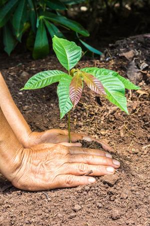 plantando un arbol: parte de los agricultores que plantan un �rbol de pl�ntulas