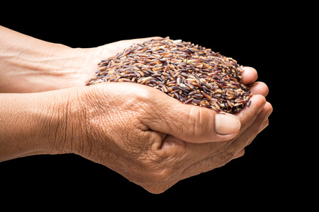 cereals holding hands: raw rice in hands holding isolated on black background