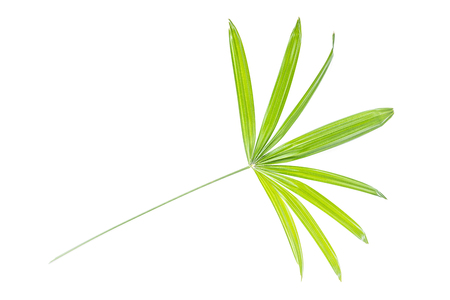 rattan leaf isolated on white backgrounds