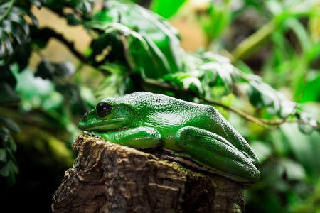 a close-up of an huge single frog sitting Stock Photo