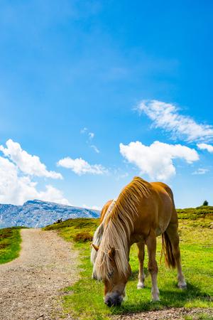 rockclimbing: horse