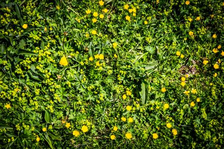 rockclimbing: meadow
