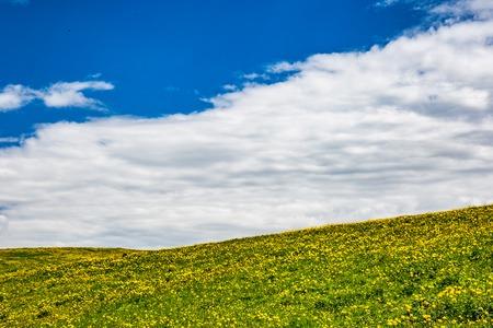 meadow gras field