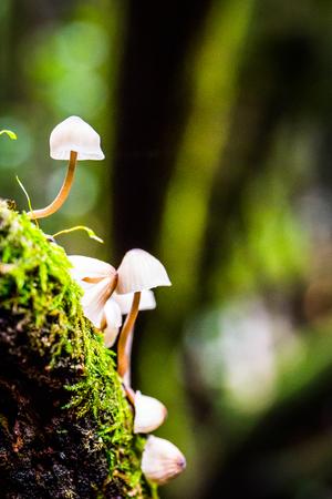 some really beautiful tiny mushrooms macro capture