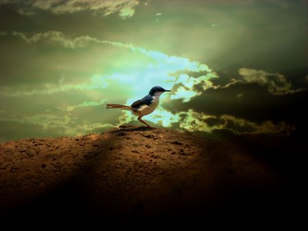 A divine background of a bird at sunset appearing like a divine bird with healing energies Stock Photo