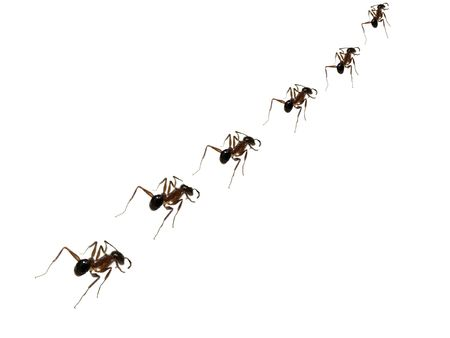 A metaphorical image of a team of ants walking in a line to their food resource in strict discipline