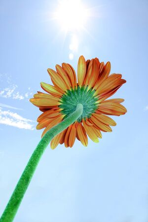metaphorical: A metaphorical image of an orange flower facing the sun, harnessing the solar power.