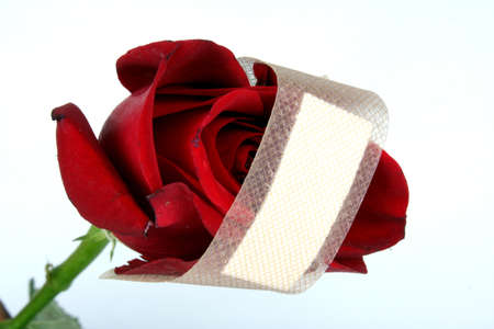 metaphorical: A metaphorical image of a red rose representing love with a bandage for healing its wound.