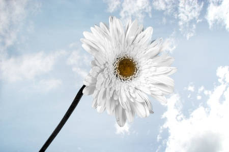 divinity: A white flower on a sky background symbolizing divinity. Stock Photo