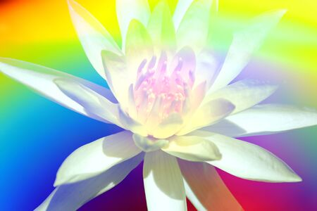 A colorful background with a divine white flower.
