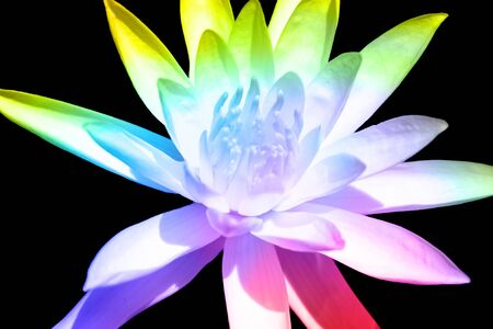 divinity: A divine multicolored flower, on black background.