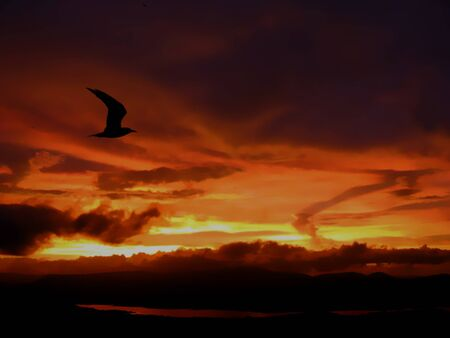 A silhouette of a bird flying accoss story skies at the time of sunset  photo